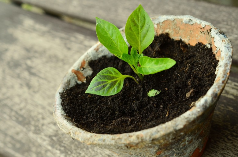 plant-786689_1920